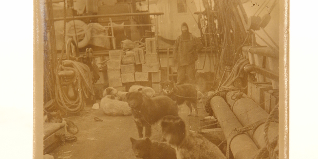 Rare photos of Antarctic expedition come under the hammer